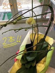 胡蝶蘭2018